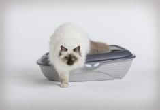 Kočičí toaleta Cocó
